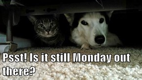 Psst! Is it still Monday out there?
