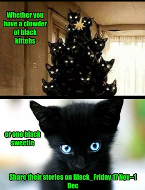 Showcase your Black Cat Stories on Black_Friday