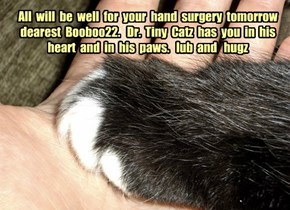 All  will  be  well  for  your  hand  surgery  tomorrow  dearest  Booboo22.   Dr.  Tiny  Catz  has  you  in  his  heart  and  in  his  paws.   lub  and   hugz
