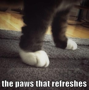 the paws that refreshes