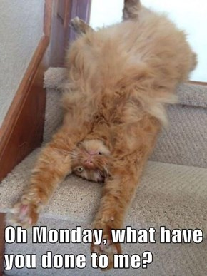 Oh Monday, what have you done to me?