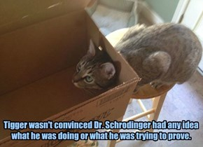 Tigger wasn't convinced Dr. Schrodinger had any idea what he was doing or what he was trying to prove.