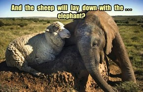 And   the   sheep   will   lay   down  with   the  . . .  elephant?