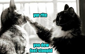 Cat Confirmed Diagnosis
