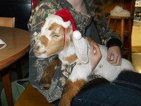 Reader Squees: Mary Had a Little Goat