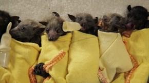 Holy Baby Bat Burritos Batman!