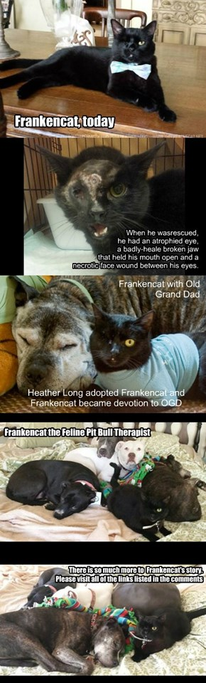 AnimalRescues is pleased to introduce you to an amazing Black Cat, Frankencat (With copyright permission from Bernadette Kazmarski & Heather Long)