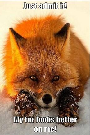 Just admit it!  My fur looks better                                                    on me!