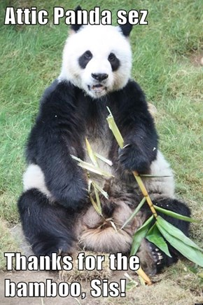 Attic Panda sez  Thanks for the bamboo, Sis!