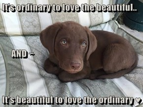 It's ordinary to love the beautiful..      AND ~ It's beautiful to love the ordinary ♥