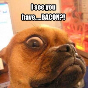#pug #bacon #animals #dogs