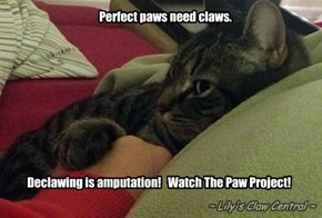 Paws need claws
