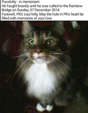 Pusskitty - in memoriam