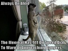Always On Alert  The Meerkat Has 911 On Speed Dial To Warn Of Approaching Dangers