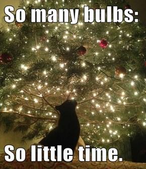So many bulbs:  So little time.