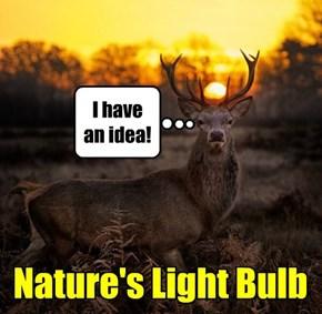 A Really Bright Idea