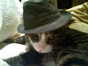 M'eow