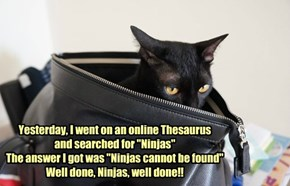 """Yesterday, I went on an online Thesaurus  and searched for """"Ninjas"""" The answer I got was """"Ninjas cannot be found"""" Well done, Ninjas, well done!!"""