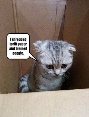 Kitteh Confessional.