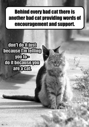Behind every bad cat there is another bad cat providing words of encouragement and support.