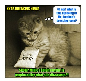 "SHOCKING SCANDAL! Sweet Skolar Millie Tabishsmythe finds large bag of Catnip in Pageant Director Mr. Hamitup's dressing room! Principal Dontebanfinkaboutit vows: ""We'll get to teh bottom ob dis outrage! An' heads will roll!"""