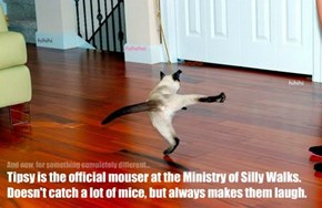 Tipsy is the official mouser at the Ministry of Silly Walks. Doesn't catch a lot of mice, but always makes them laugh.