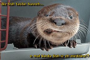 diz fish tastin funneh...  n wut kinda fish iz eh medzinz!?