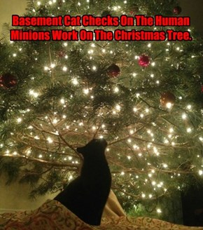Basement Cat Checks On The Human Minions Work On The Christmas Tree.