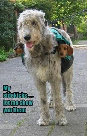 Literal Wolfhound Is Literal
