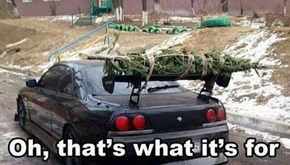 Spoilers: It's for Christmas Trees