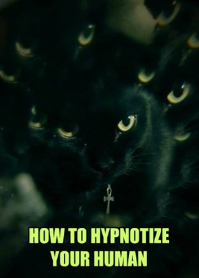 HOW TO HYPNOTIZE YOUR HUMAN