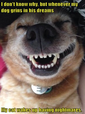 I don't know why, but whenever my dog grins in his dreams  My cat wakes up having nightmares.