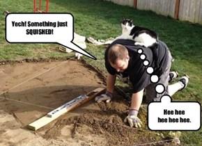 CATS, ya gotta love 'em!