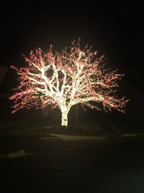 Every Branch Has More Lights Than a Regular Tree