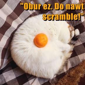 """""""Obur ez. Do nawt scramble!"""""""