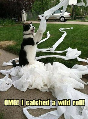OMG!  I  catched  a  wild  roll!