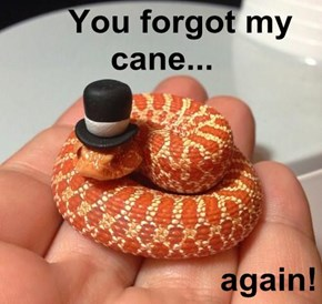 You forgot my cane...  again!