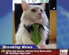 Breaking News - sillybrated defunse attornee Purry Mason joins       Mr. Hamitup's legul team