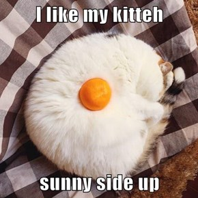 Lolcats Are now Available for Brunch