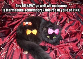 Dey DU NAWT go well wif mai naem.  Is Marmaduke, remembers? Noe red or yello or PINK!