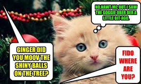 KITTY GETS GOGGIE REVENGE