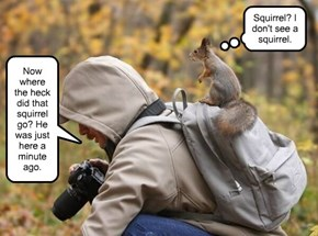 Rocky didn't know he was a squirrel