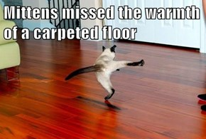 Mittens missed the warmth of a carpeted floor