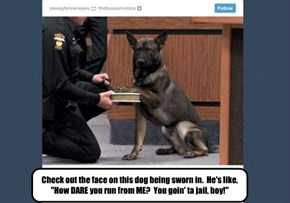 "Check out the face on this dog being sworn in.  He's like, ""How DARE you run from ME?  You goin' ta jail, boy!"""