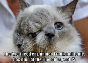 The two-faced cat, named Frank and Louie, has died at the ripe old age of 15