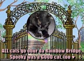 ALL cats go obur da Rainbow Bridge.. Spooky was a GOOD cat, too ♥