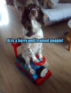 Ai is a berry well trained goggie!