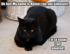Homer Got Adopted!