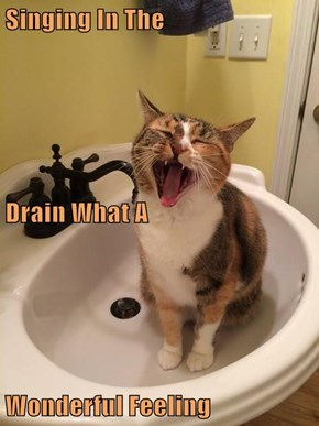 Singing In The Drain What A Wonderful Feeling