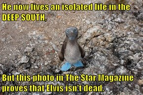 He now lives an isolated life in the DEEP SOUTH,  But this photo in The Star Magazine proves that Elvis isn't dead.